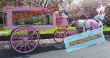 Pinkish  Funeral  Horse Carriage