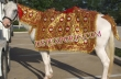 Wedding Horse Costumes