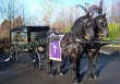 Blakish  Funeral  Horse  Carriages