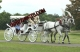 Wedding  Horse  Drawn  Carriage For Sale